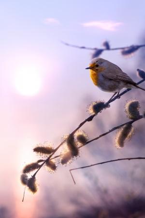 art beautiful spring morning nature background Reklamní fotografie