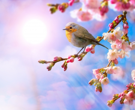 good mood: abstract Spring border background with pink blossom  Stock Photo