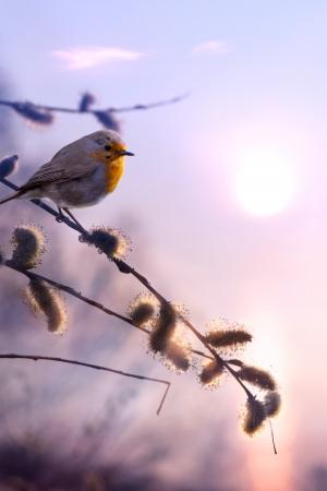 sauce: arte hermosa primavera la naturaleza de fondo por la ma�ana Foto de archivo