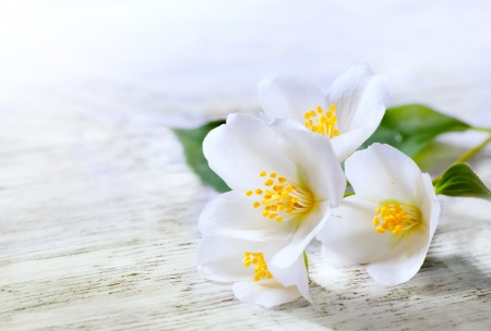 木製白地にジャスミンの白い花