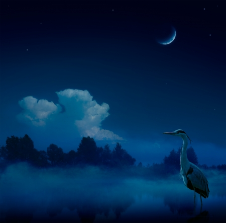 Art fantasy blue night  background Stock Photo - 20937341