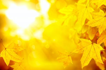 abstract autumn fall yellow leaves nature background  photo