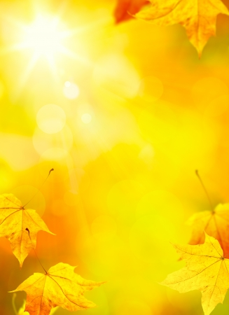 abstract autumn yellow leaves background   photo