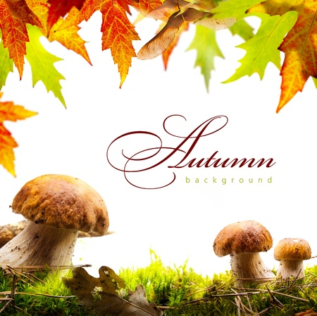 art autumn background with yellow leaves and autumn mushroom photo