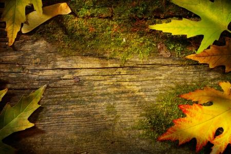 tahta: Ahşap zemin üzerine sanat sonbahar yaprak Stok Fotoğraf