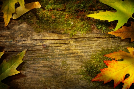 art autumn  fall  leaf  on wood background  photo