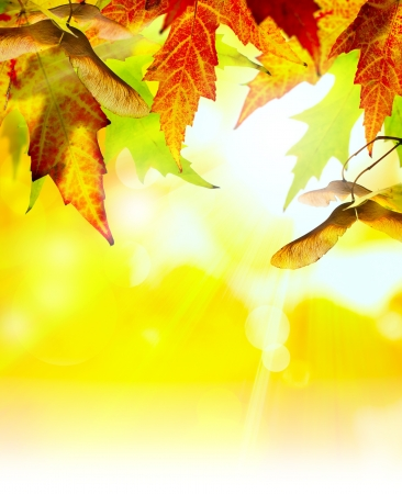 good mood: autumn background with yellow leaves of autumn  tree lit by the sun