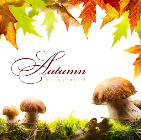 art autumn background with yellow leaves and autumn mushroom Stock Photo