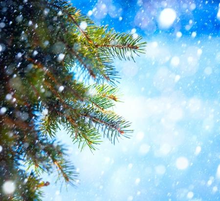 branche sapin noel: Branche d'arbre de No?l sur un fond bleu