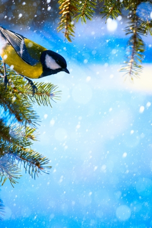 Christmas card with bird on the Christmas tree and snowflakes photo