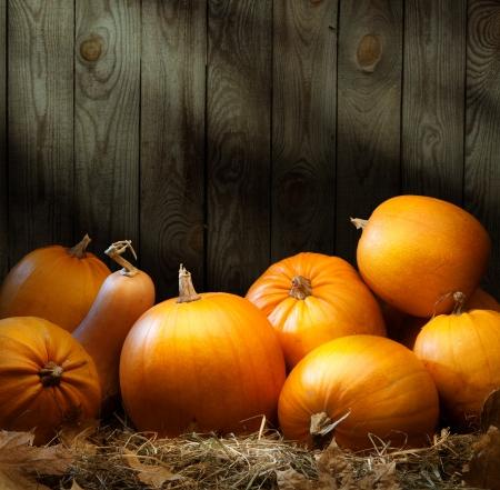 pumpkin: Art autumn Pumpkin thanksgiving background