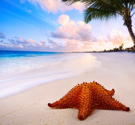 Art beautiful  landscape with Sea star on the beach  photo