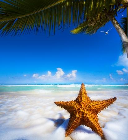 Sea star on the beach Stock Photo - 25444888