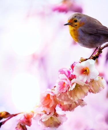art beautiful spring morning nature Reklamní fotografie - 25789819