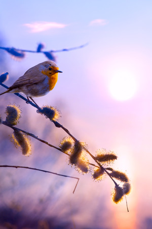 birds scenery: art beautiful spring
