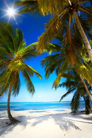 untouched: art summer Untouched tropical beach