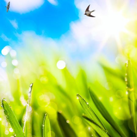 golondrinas: fondo resúmenes primavera