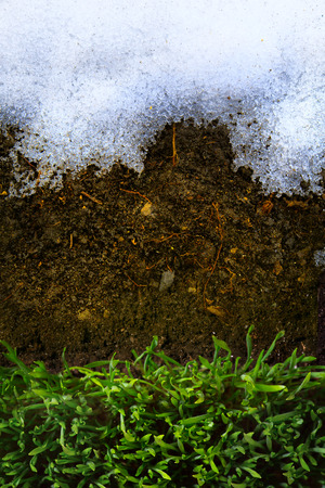 winter thaw: art Spring Ground covered with thawing snow and green grass Stock Photo