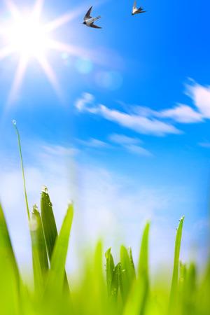 초록 beautifu 봄 배경 스톡 콘텐츠