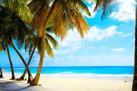 Art  beautiful untouched tropical sea beach photo