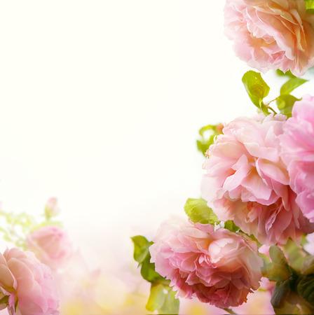 colorize: Beautiful pastel floral border background