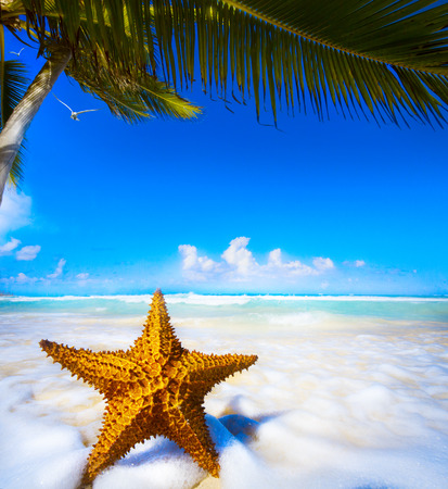 Sea star on the beach  photo