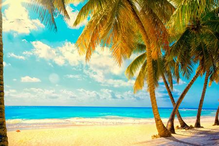 Hermosa puesta de sol sobre el mar con vistas a palmeras en la playa de arena blanca en una isla del Caribe photo