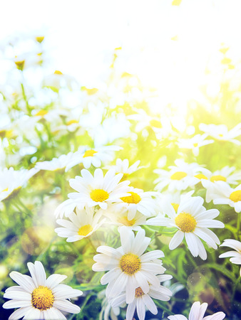 Bright summer flowers in Natural background photo