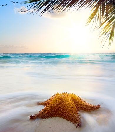 Starfish at beach in sunset time  photo