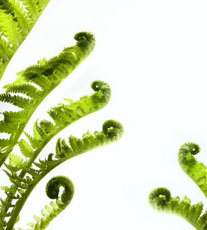 solated: Tropical jungle as a blank frame with fern green plants