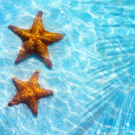 Abstract  Blue sea tropical background with starfish on sand photo