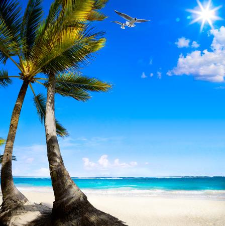 untouched: Art Untouched Caribbean tropical beach  Stock Photo