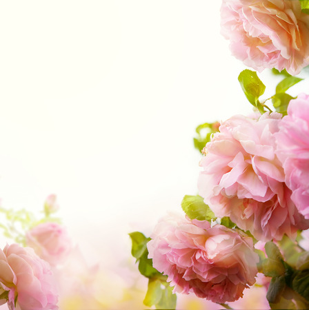 colorize: abstract Beautiful pastel floral border background  Stock Photo