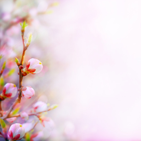 art Beautiful Spring border background with pink blossom  photo