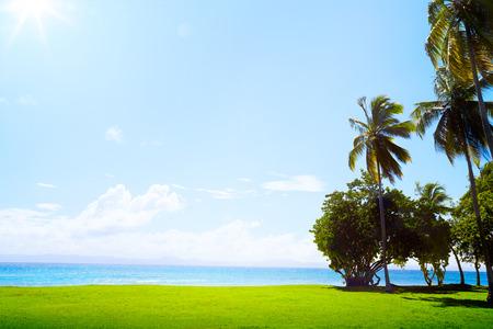 palm garden: art Coconut palm on golf course grass and Caribbean sea