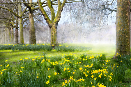 arbol de pascua: Flores de primavera de Arte en el parque Inglés Foto de archivo
