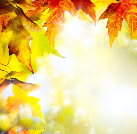 sfondo giungla: foglie d'autunno sfondo Archivio Fotografico