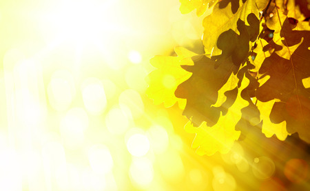 changing colors: Art Beautiful autumn background with  leaves  Stock Photo
