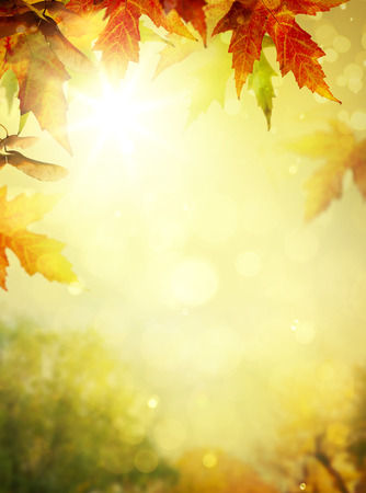 秋の葉の背景;秋の公園で紅葉 写真素材