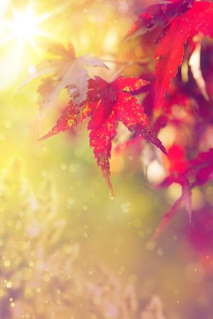 아트 추상 가을 나무의 자연 배경