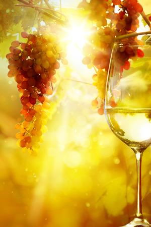 明るい太陽の背景を持つツルの熟したブドウのワインとのガラス。ブドウ畑の収穫の季節。 写真素材 - 31966524