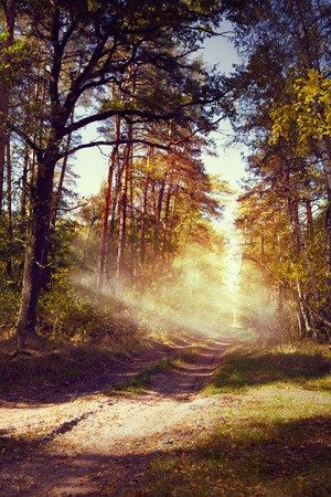 long road: art beautiful autumn forest landscape with road in sunset