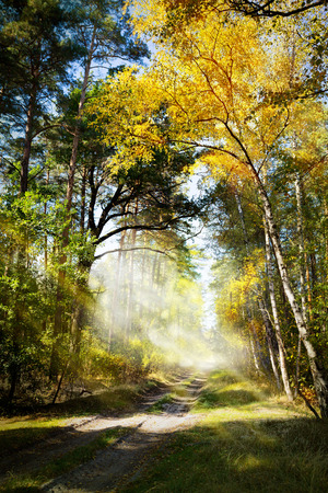 art Beautiful morning in the misty autumn forest with sun rays photo
