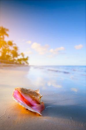 熱帯のビーチでシェル