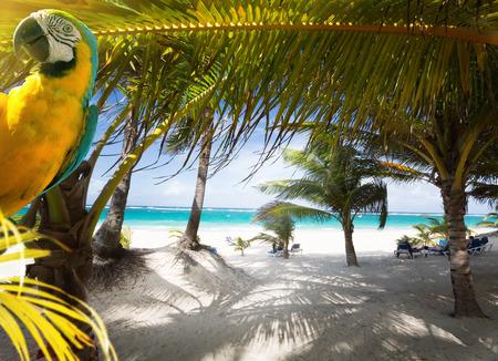 Art Vacation on Caribbean Beach Paradise Stock Photo