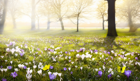 Пейзаж: абстрактный солнечный прекрасный весенний фон
