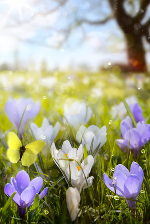 abstract sunny beautiful Spring background photo