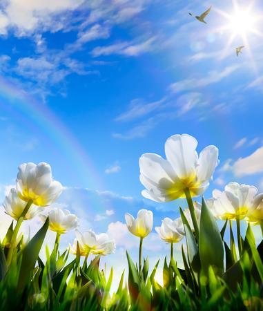 art Spring flower on Easter Day Reklamní fotografie - 36907476