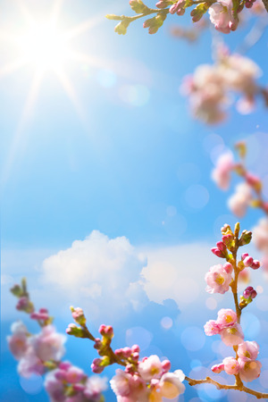Beautiful spring blossoming tree on sky background Reklamní fotografie