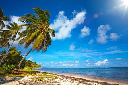 Art  beautiful seaside view  background